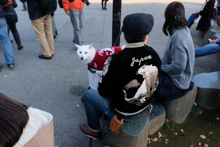 coincidencia perro blanco